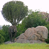 play Jigsaw: Serengeti