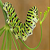 play Cute Colored Caterpillar Slide Puzzle