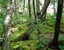play Hidden Object-Jungle
