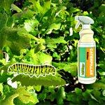play Hidden Caterpillar