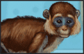 play My Funny Monkey Caring