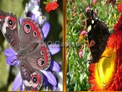 play Butterfly Similarities