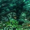 play Sea Neptune Enigma