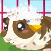 play Guinea Pig Care
