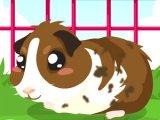 play Guinea Pig Care
