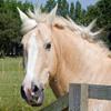 play Jigsaw: Horse Portrait