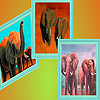 play The Elephants Family In The Desert Puzzle