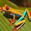 play Curious Frog In The Woods Puzzle