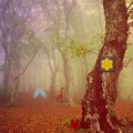 play Fog Forest Escape