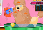 Cute Poodle Spa Day game