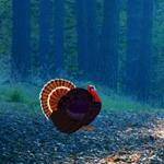 play Turkey Asylum Escape-5