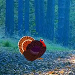 play Wow Turkey Asylum Escape 5