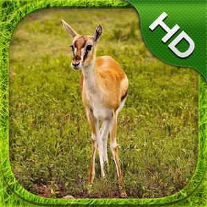 play Gazelle Simulator - Hd