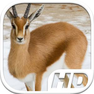 play Gazelle Simulator Hd Animal Life