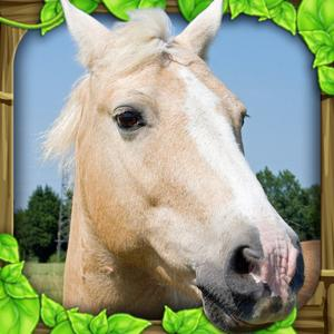 play Wild Horse Simulator