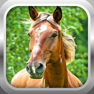 play 3D Horse Simulator Free: Extreme Forest Horse Run Sim Game