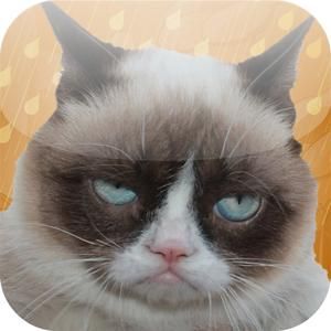 play Grumpy Cat: Unimpressed