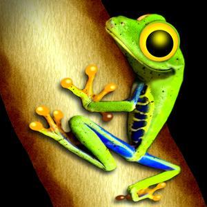 play Toxic Frog
