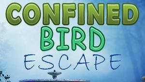 play Firstescape Confined Bird Escape