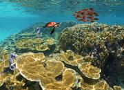 play Underwater Treasure Escape