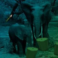 Elephant Forest Escape game