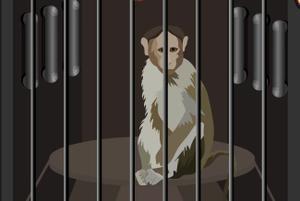 play 5N Monkey Lab Escape
