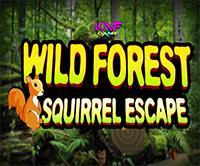Wild Forest Squirrel Escape game