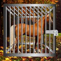Starving Horse Rescue Escape game