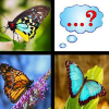 Butterfly Memory Match game