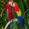 Parrots Jigsaw Puzzle game
