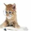 Cute Cat With Glasses Puzzle game