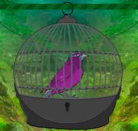 play Zooo Bird Escape