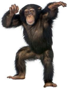 Flippin Monkeys 101 game