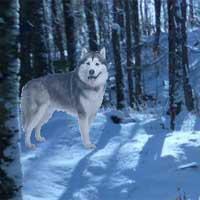 Alaskan Winter Forest Escape game