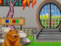 play Forest Baby Bear Rescue
