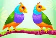 play Love Birds