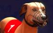 play Greyhound Racing