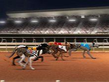 Greyhound Racing game