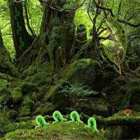 Reptiles Forest Escape game