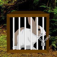 Rain Forest Rabbit Escape game
