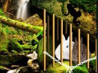 play Rabbit Couple Rescue