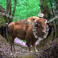 play Escape Game: Save The Country Bull