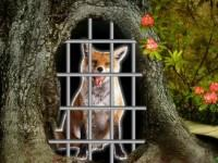 Crazy Fox Escape game