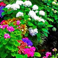 play Flowers Garden Escape