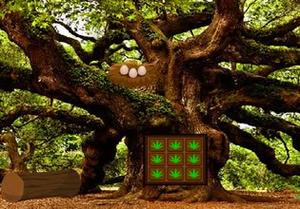 play Oak Tree Forest Escape