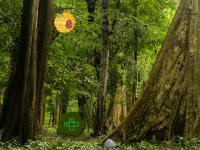 play Wild African Forest Escape