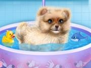 Pomeranian Puppy Day Care game