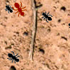 Ant Splat game