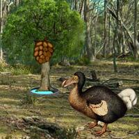 play Dodo Bird Evolution