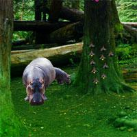 Hippo Jungle Escape game